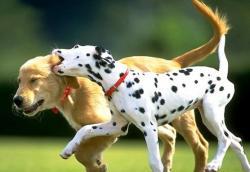 dogssss