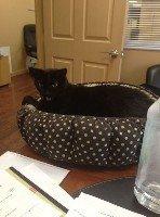 Luna - my office cat - by Howard Nelson